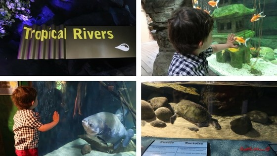 Our Visit to the Blue Planet Aquarium