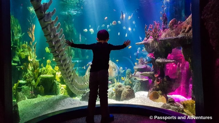 Boy standing in front of the main aquarium tank in SeaLife Helsinki