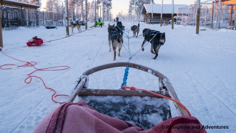 Family Adventure On A Bearhill Husky Safari - A team of husky dogs setting off with a sled in Lapland