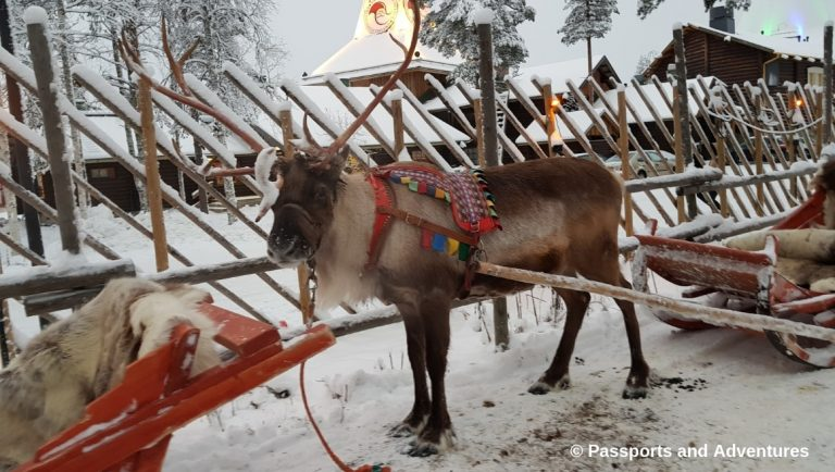 Awesome Things To Do In Rovaniemi With Kids - Santa's reindeer ready to take someone on a sleigh ride at Santa Claus Village.