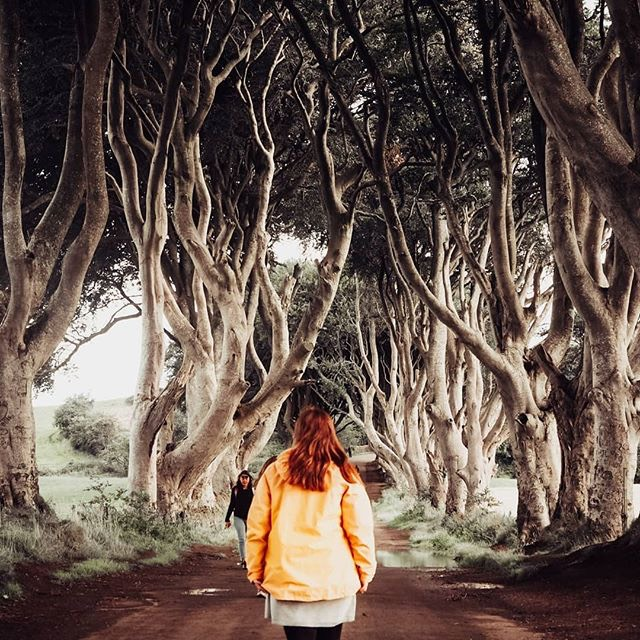 The Dark Hedges, made famous by the Game of Thrones Series is a popular tourist destination in Ireland.