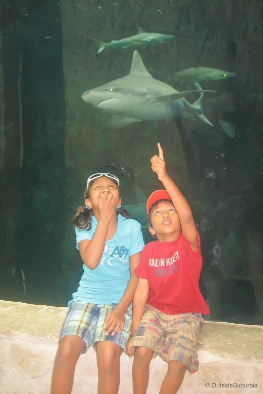 Two kids in front of a shark tank at the Dallas World Aquarium