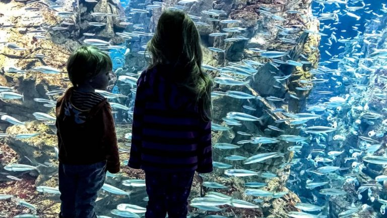 Two young kids in front of a fish tank at the Osaka Aquarium