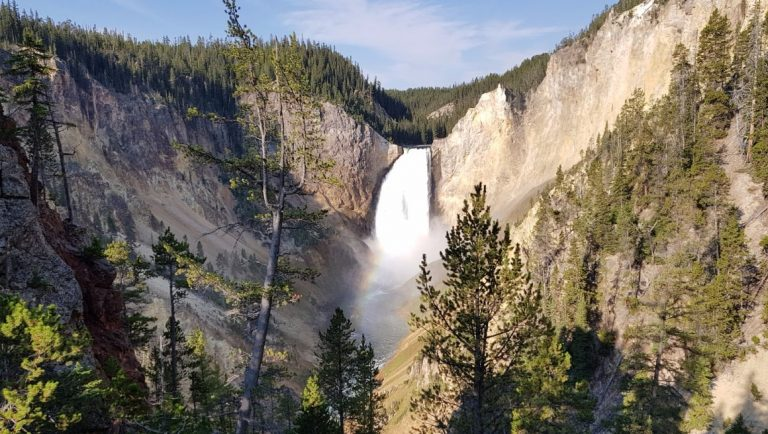 The Lower Falls of the Yellowstone River - One of the best things to see in Yellowstone National Park with kids