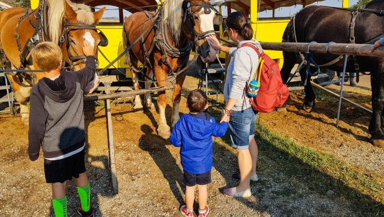 Meeting the wagon horses from the Old West Dinner Cookout - One of the best things to do in Yellowstone with kids