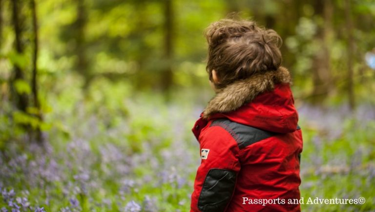 Boy looking at bluebells in the background in Coed Cefn, Crickhowell