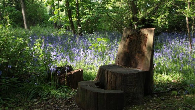 Bluebells at The Spinney in Hampton-in-Arden