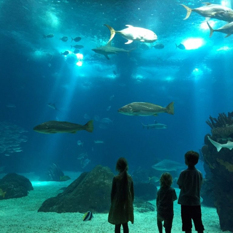 Kids in front of the huge fish tank in the Oceanario de Lisboa