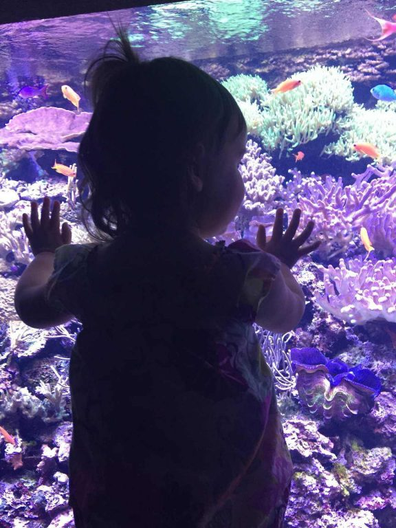 Toddler girl at a fish tank in the Seattle Aquarium