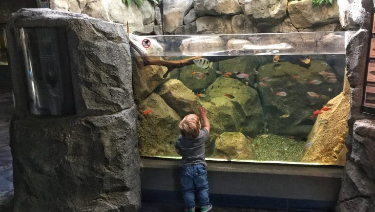 Toddler in front of a fish tank in the Pittsburgh Zoo and PPG