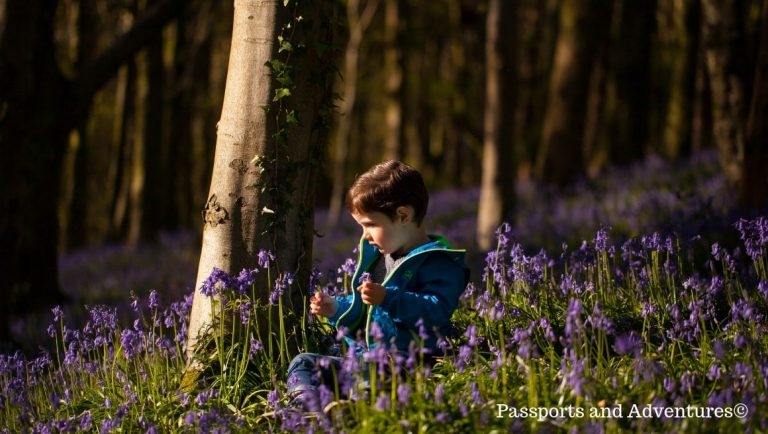 Boy sitting among bluebells in the Wenallt, Cardiff