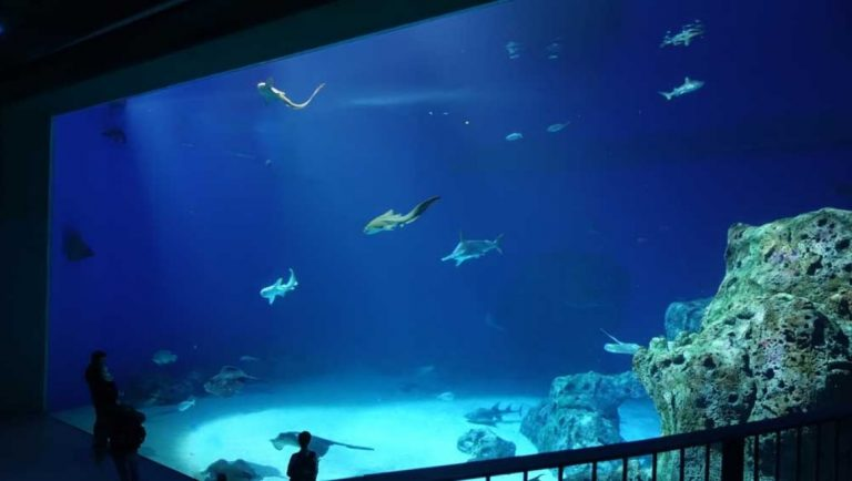 Huge fish tank in the Denmark National Aquarium