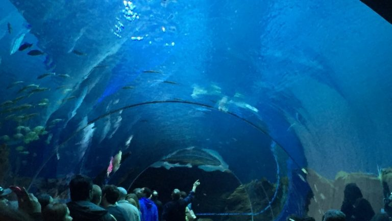Shark tunnel in the Georgia Aquarium, USA
