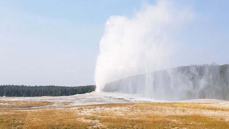 Olf Faithful Geyser in Yellowstone - A must-see in Yellowstone with kids