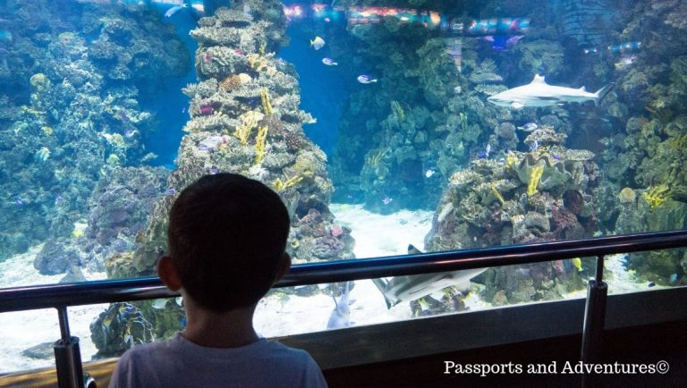 A young boy in front of the shark tank in L'Aquarium Barcelona
