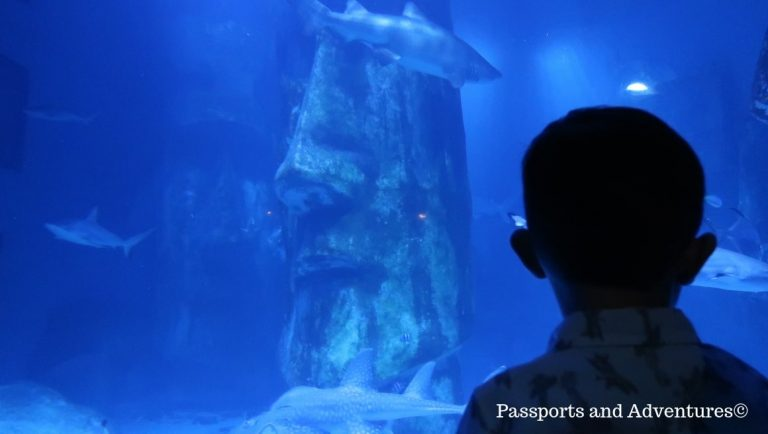 A toddler in front of the main tank at the Sea Life London Aquarium, which is a great toddler days out London attraction