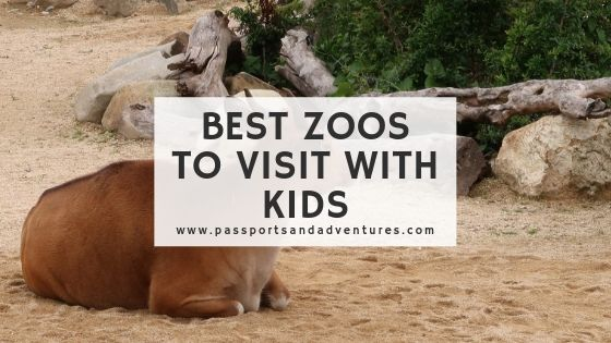 Best Zoos to Visit with Kids in the World