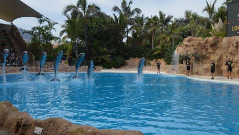 Dolphins at Loro Parque, Tenerife