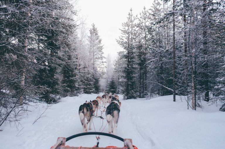 A team of husky dogs pulling a sled through the snow in Lapland