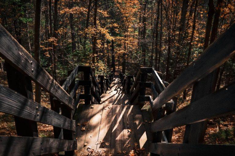 An autumn trail in Miinesota