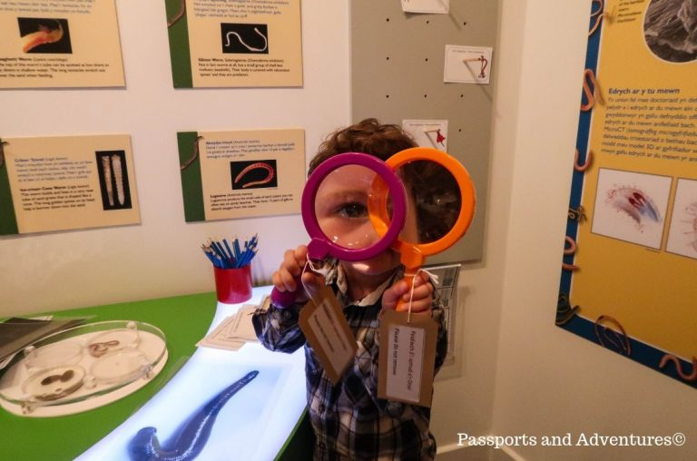 A little boy looking through two magnifying glasses in a museum
