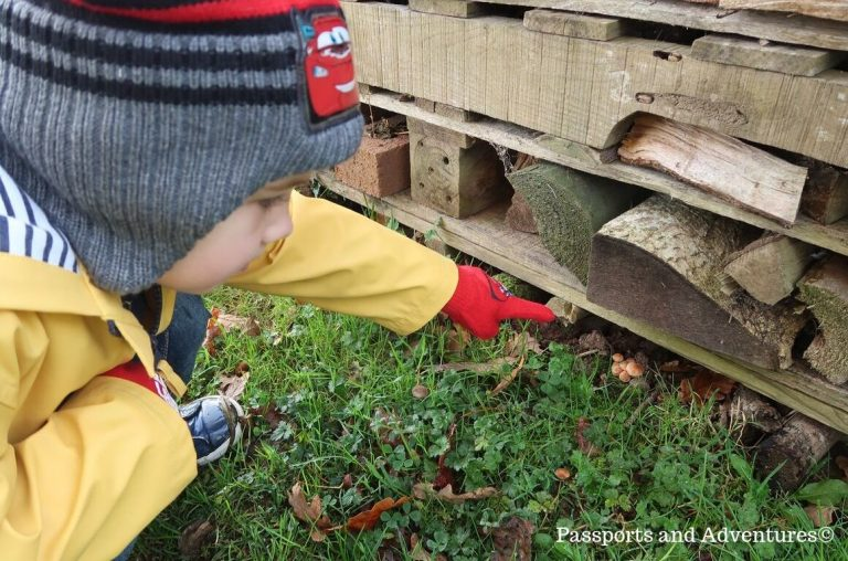 A little boy in a yellowst coat and red gloves and hat doing at toadstools on the ground underneath some logs.