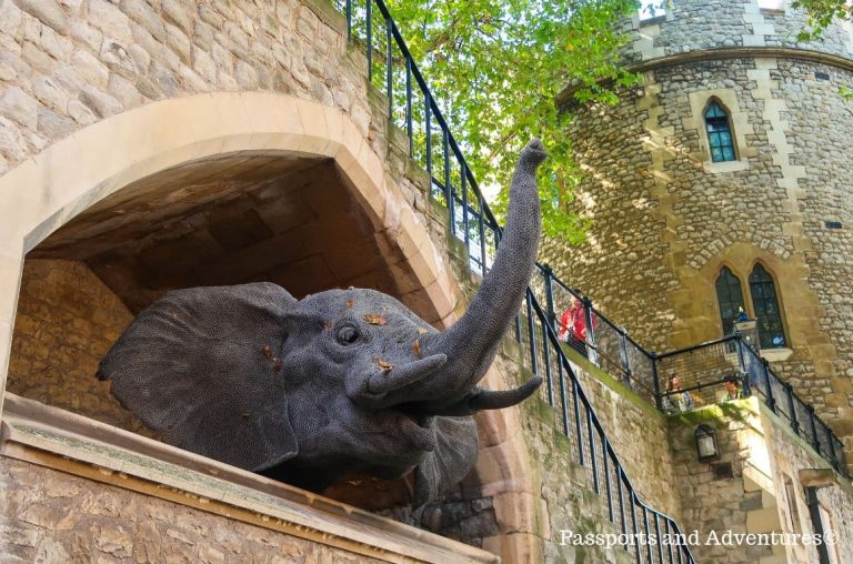 An elephant head model poking out of a wall in homage to the menagerie at the Tower of London