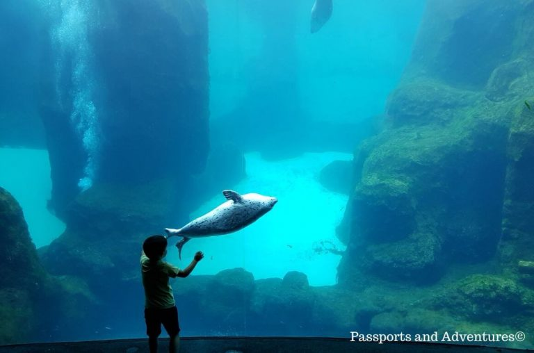 A little boy in front of a large tank of water with a playful seal beside them at the window