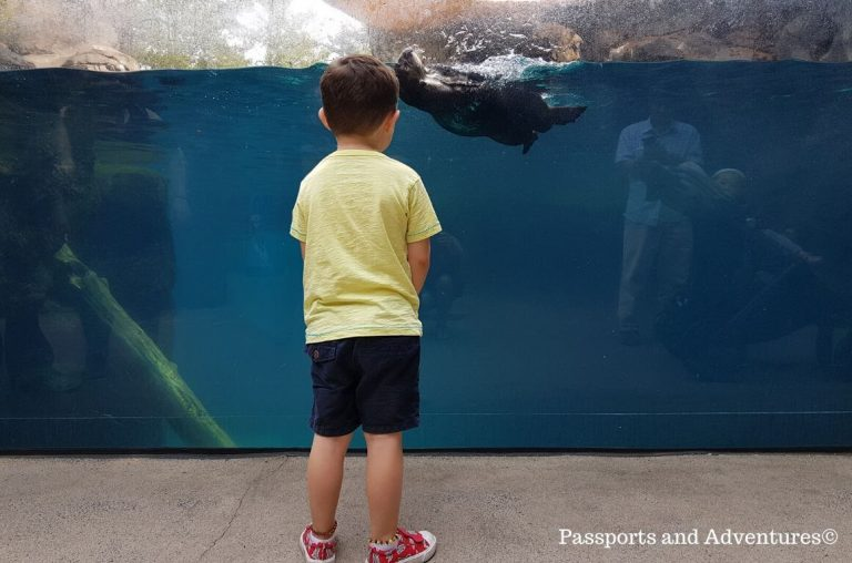 A little boy watching penguins swimming inside the water of their enclosure