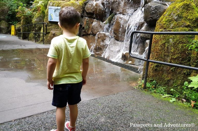A little boy looking at a waterfall inside the Great Northwest section of the Oregon Zoo in Portland