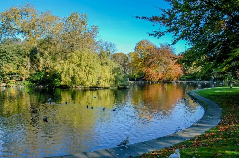 A picture along the edge of the lake in St Stephen's Green park in Dublin with ducks on the surface of the water