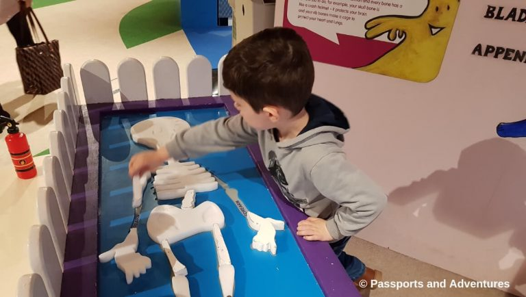 A little boy playing with a toy skeleton in the Dublin Children's Museum