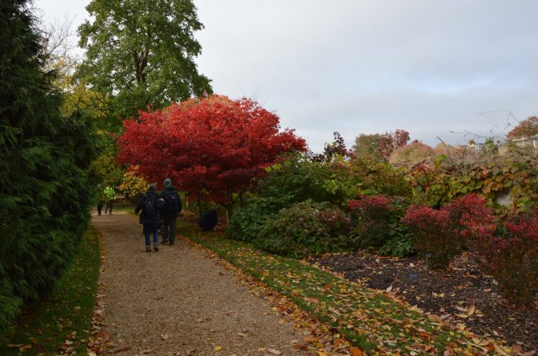 An autumnal picture of a couple walking along a pathway in the Botanic Gardens in Cambridge