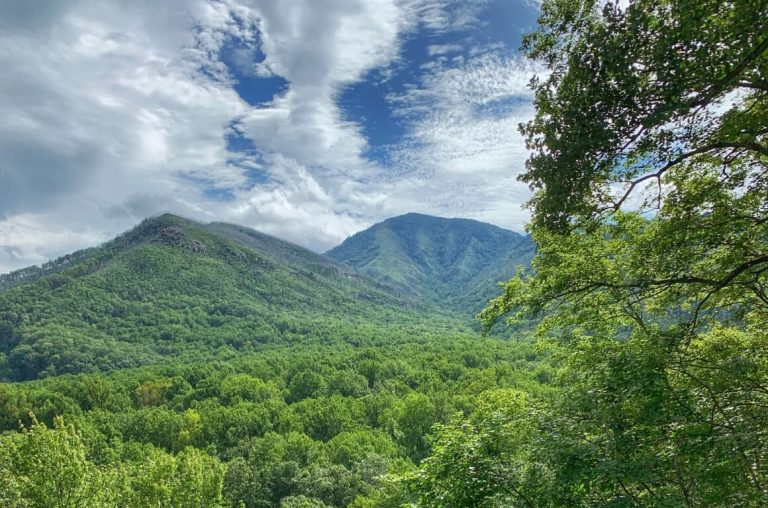 A picture of forests of green trees leading to mountains in the background also covered in lush green trees