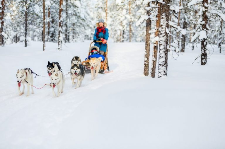 A picture of a sled with an adult driving and a child in the sled, being pulled by a team of husky dogs in Lapland