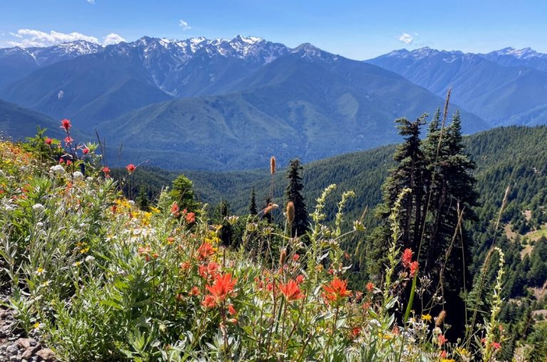 A picture of hills and mountains with wild flowers in the Olympic National Park