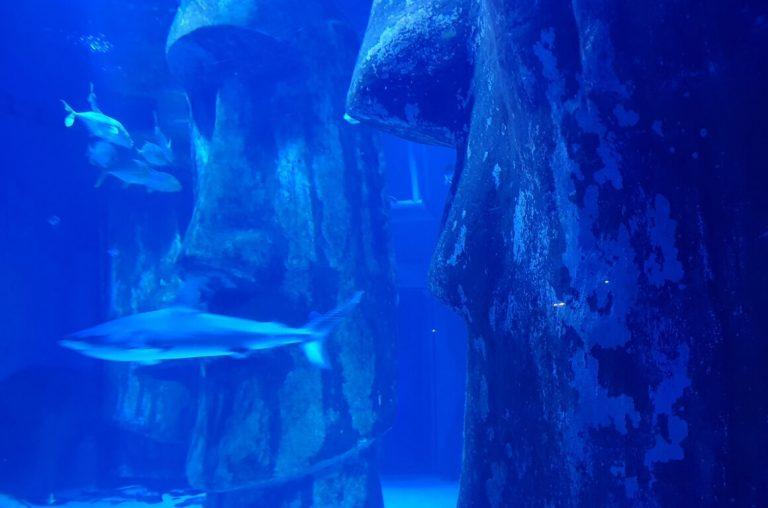 A picture of the Easter Island head in the main tank at the Sea Life London Aquarium.